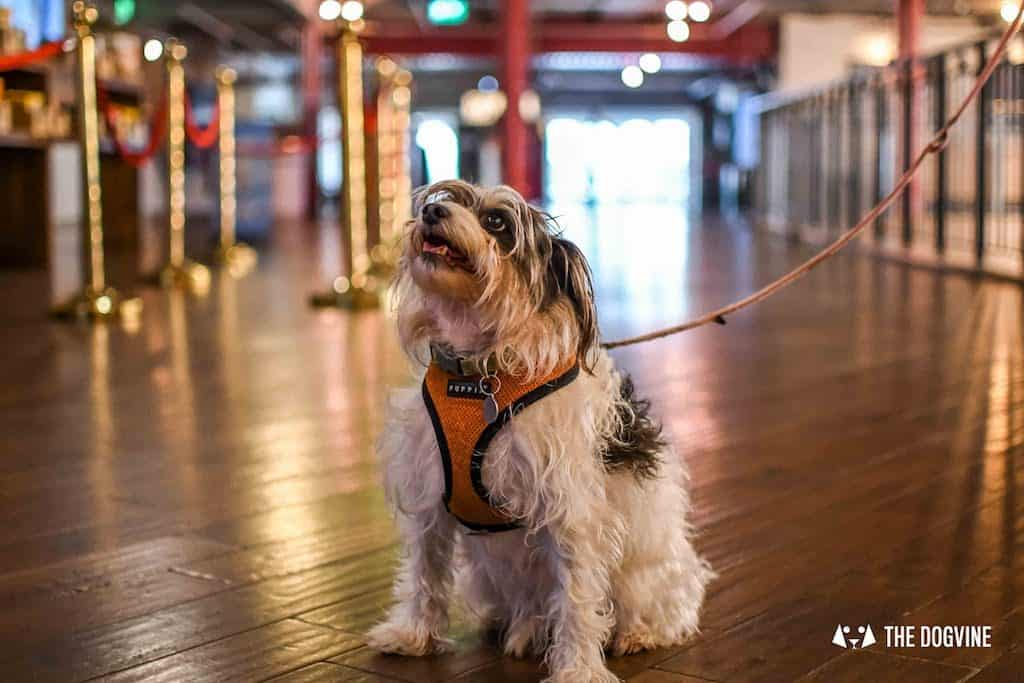 Picturehouse Central Dog-Friendly Cinema Isle of Dogs 24