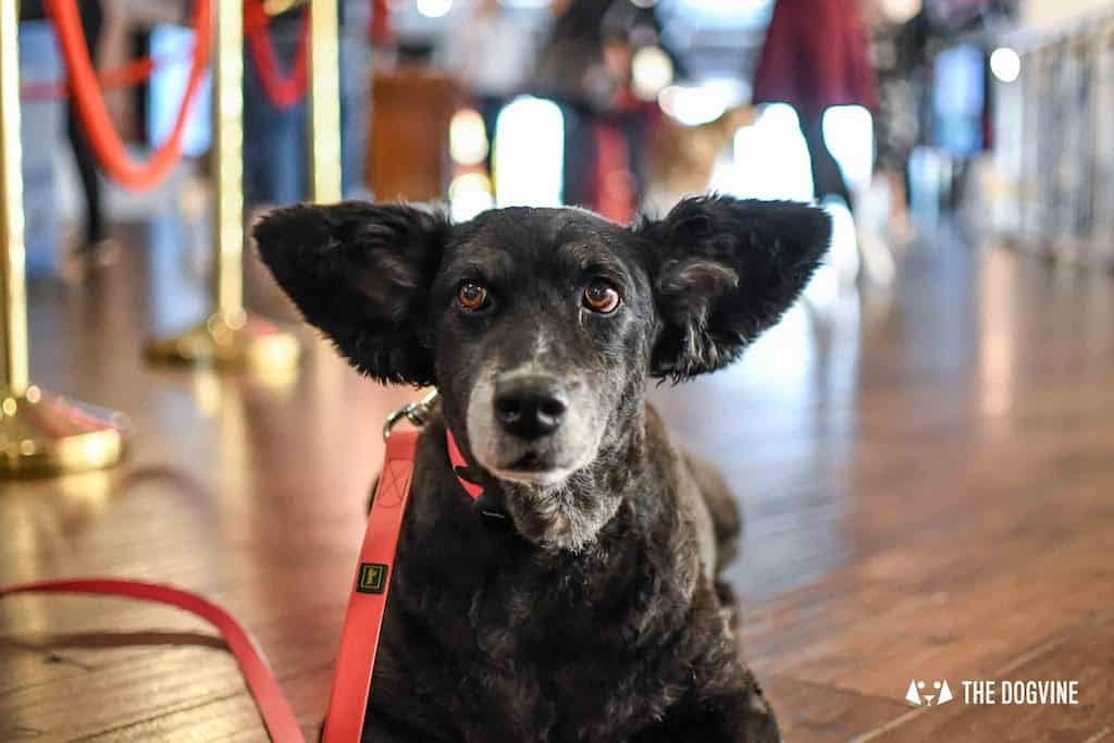 Picturehouse Central Dog-Friendly Cinema Isle of Dogs 36