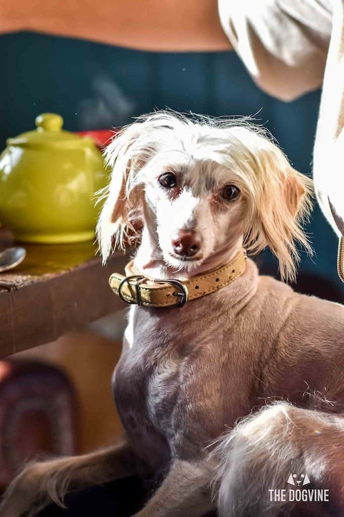 Things To Do With Your Dog In London This Weekend 26-29 April 3