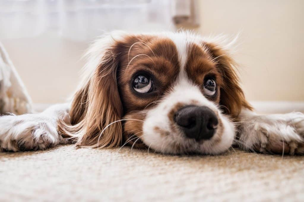 Where To Do A Dog First Aid Course In London 1