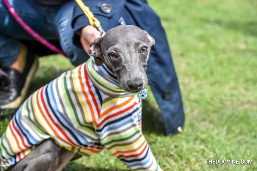 17 Of The Best Things To Do In London For Dogs   May 2018 - Richmond Mayfair Dog Show 2018