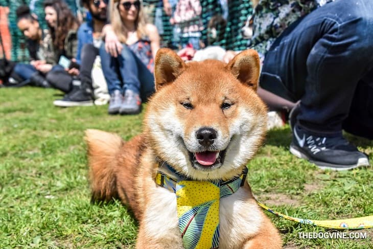 London Dog Events - Things To Do With Your Dog This Weekend | 11-13 May - 1