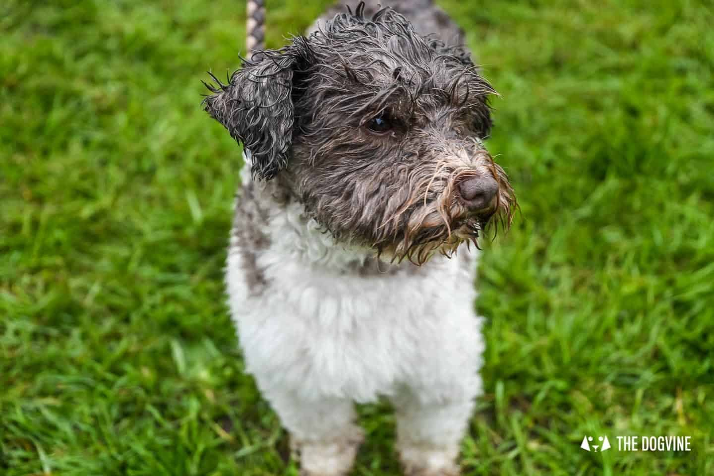London Dogs At The Great Hampstead Bark Off 2018 151