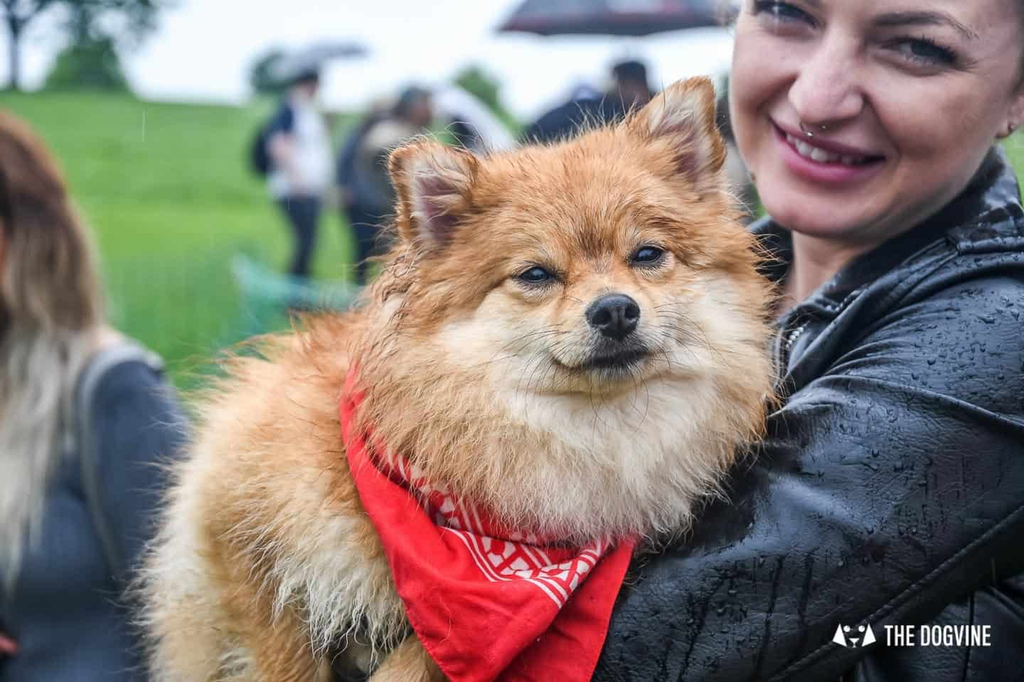 London Dogs At The Great Hampstead Bark Off 2018 157