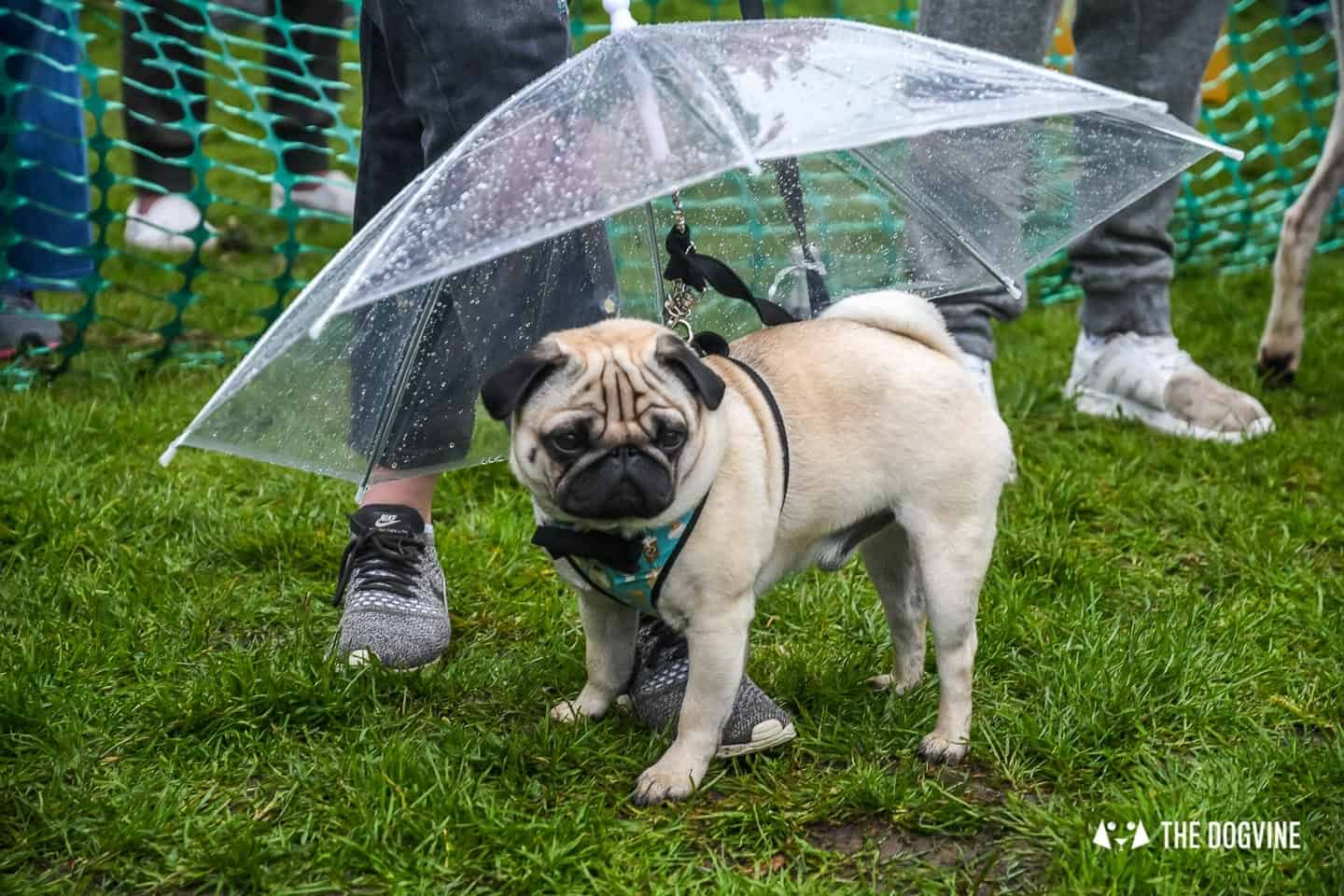 London Dogs At The Great Hampstead Bark Off 2018 175