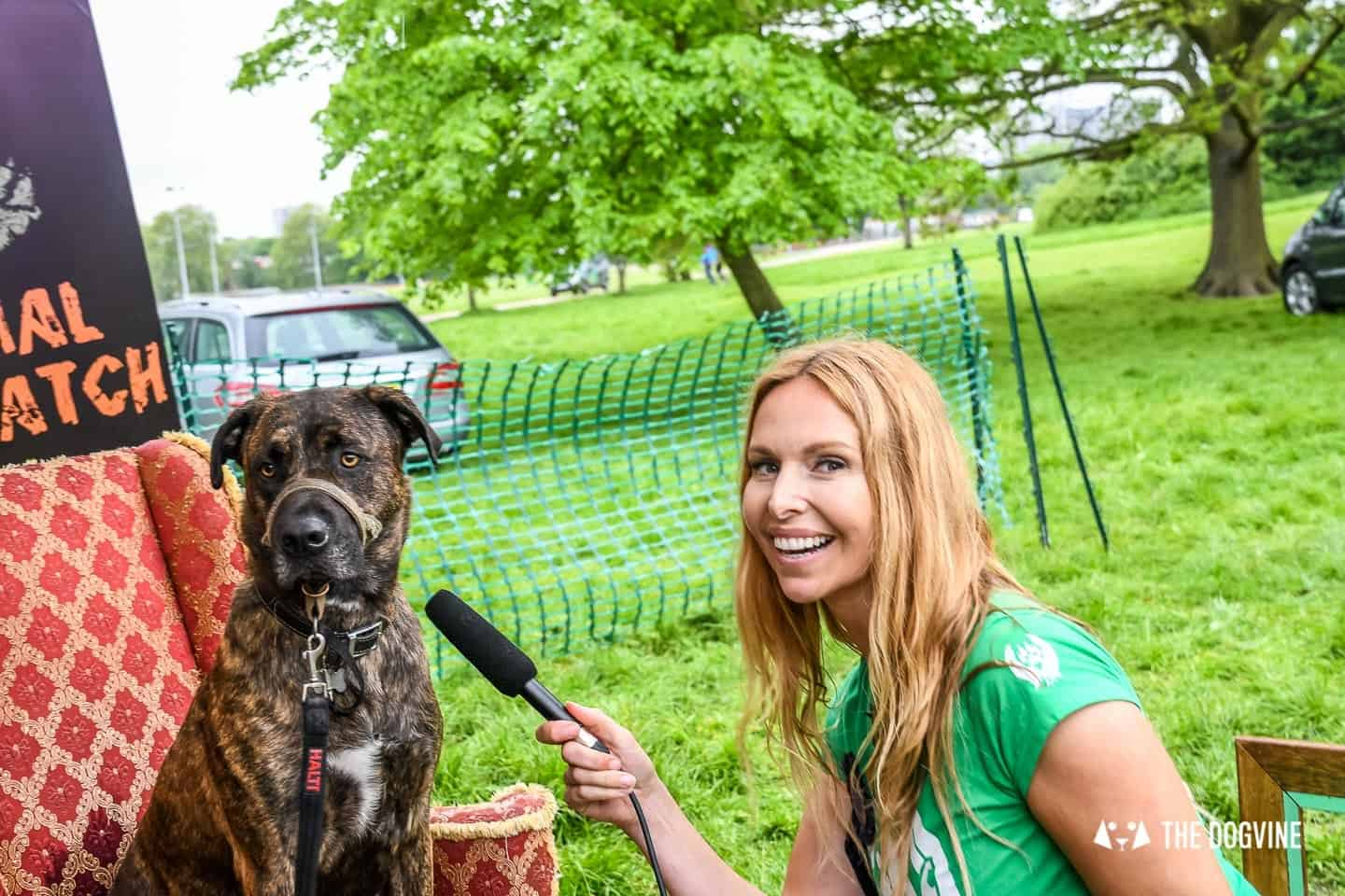 London Dogs At The Great Hampstead Bark Off 2018 196