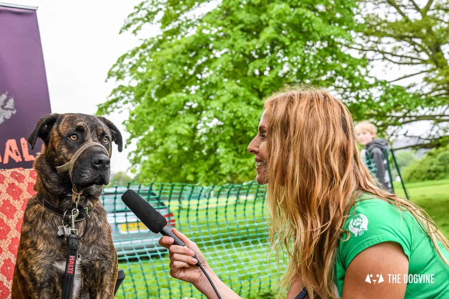 London Dogs At The Great Hampstead Bark Off 2018 198