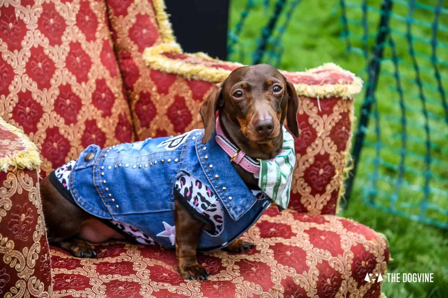 London Dogs At The Great Hampstead Bark Off 2018 5