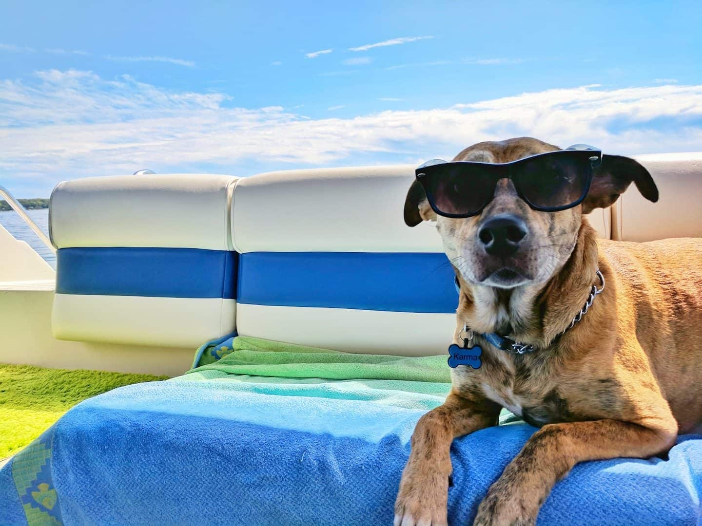 The DogBuddy Ultimate Guide to Holiday Dog Care