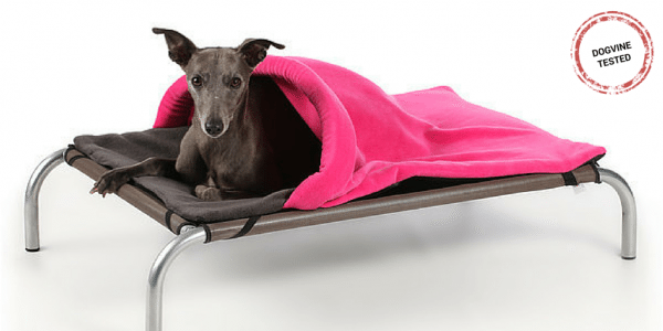 10 Doggie-licious Christmas Gifts for Dogs
