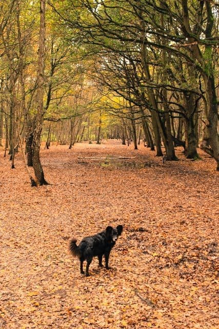 Discover London Dog Walks – Wimbledon Common Lakes & Woodland