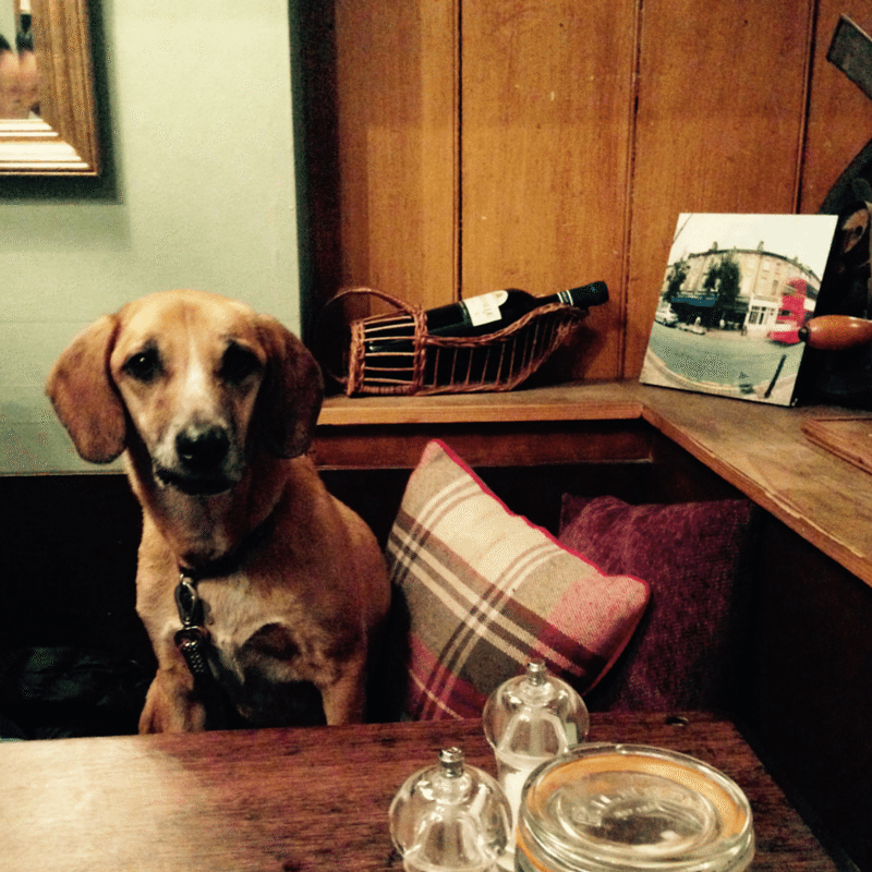 Dog Friendly Cafes and Restaurants in London – Konnigans