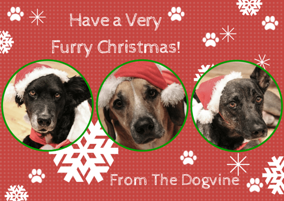Merry Christmas from The Dogvine