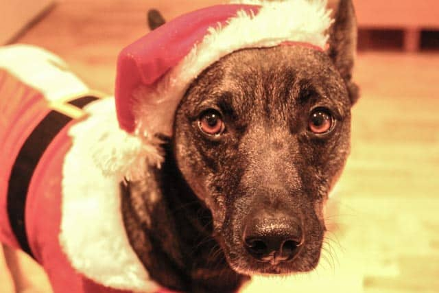 Wordless Wednesday, Santa & his Helper…