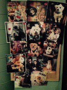 Dog Friendly Cafes and Restaurants in London - Konnigans Restauarant Dog Board of Fame