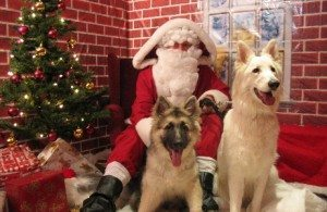 Santa Claus with former Battersea dogs at Old Windsor