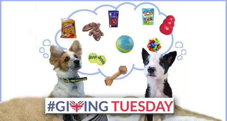#GivingTuesday - Dogs Trust