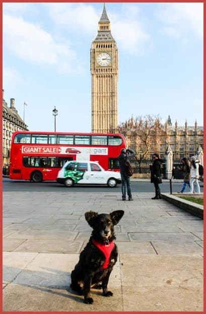 Wordless Wednesday - The Dogvine does Big Ben
