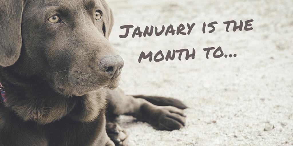 Pet Holidays and Awareness Days - January