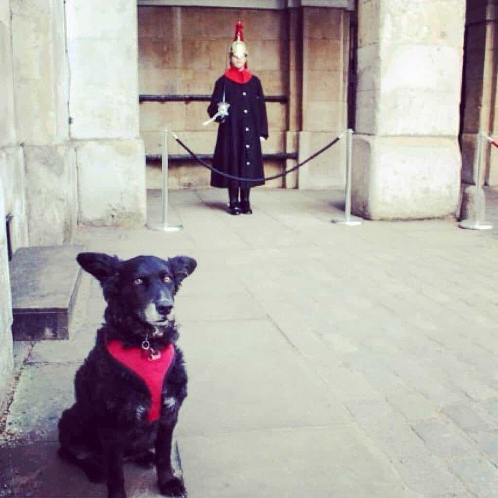 Wordless Wednesday Pawcards From London – Horse Guards Parade