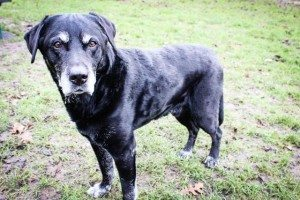 Dogs of London - Barty, Wandsworth Park's oldest dog