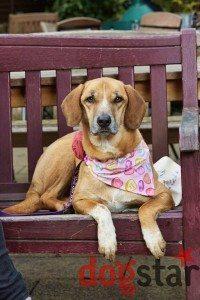 Dogstar Photo: All Dogs Matter Valentines Walk