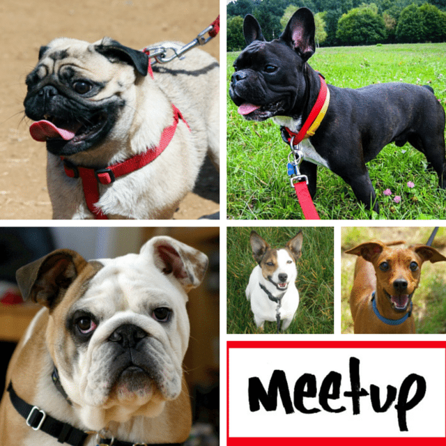 10 London Dog Meetups For You & Your Dog