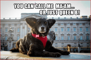 Pawcards from London  - Buckingham Palace, Queen B