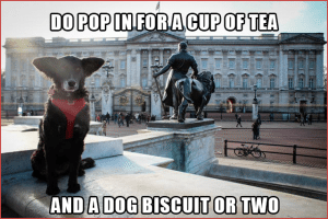 Pawcards from London  - Buckingham Palace, Pop in for a Cup of Tea