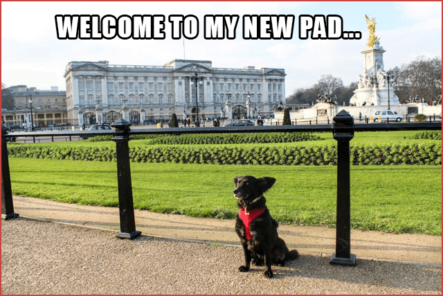 Pawcards from London  - Buckingham Palace, Welcome to My New Pad