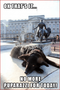 Pawcards from London  - Buckingham Palace, No More Puparazzi
