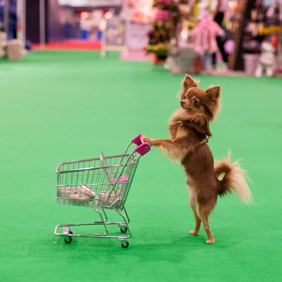 10 Reasons to Visit The London Pet Show & Win Tickets!
