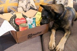 Pawpost Monthly Pet Box - Moleque the Product Tester