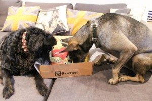 Pawpost Monthly Pet Box - smells yummy!