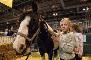 The London Pet Show - Ponies