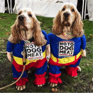 No To Dog Meat - Cabbages & Frocks Market