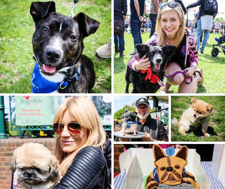 Canines, Cakes & Celebs Galore at the Hampstead Bark Off