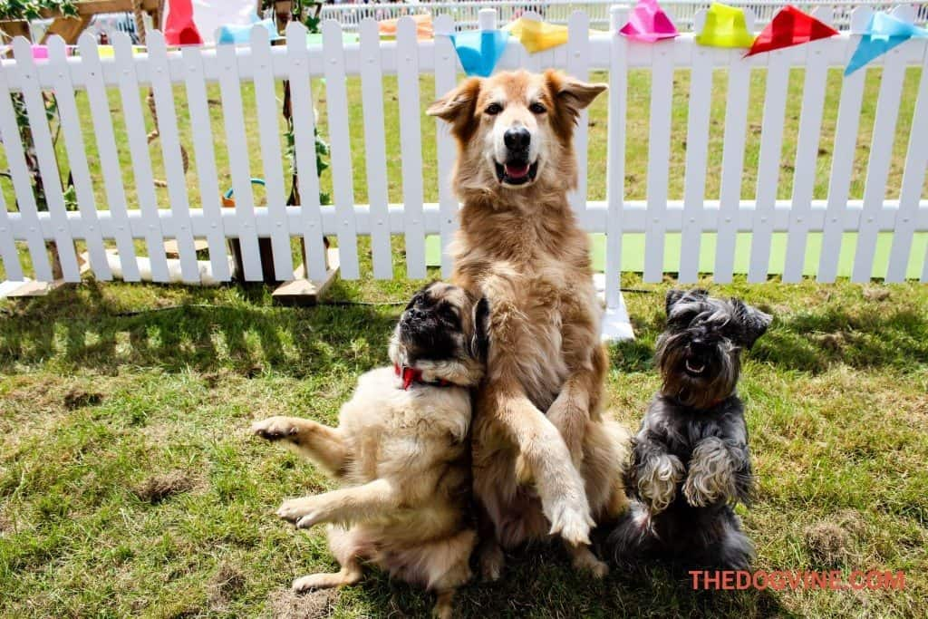 Dogs Have Their Day At DogFest 2015