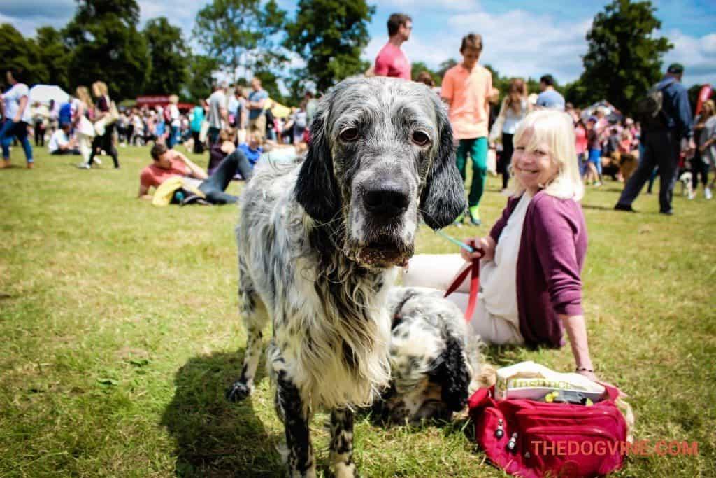 DogFest 2015
