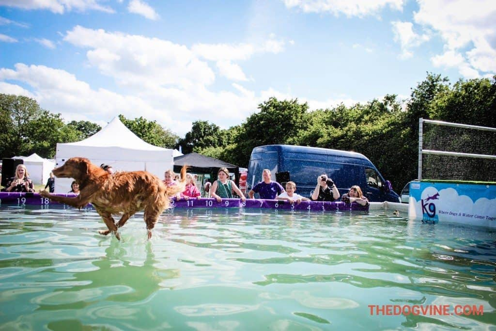 Dog Diving DogFest 2015