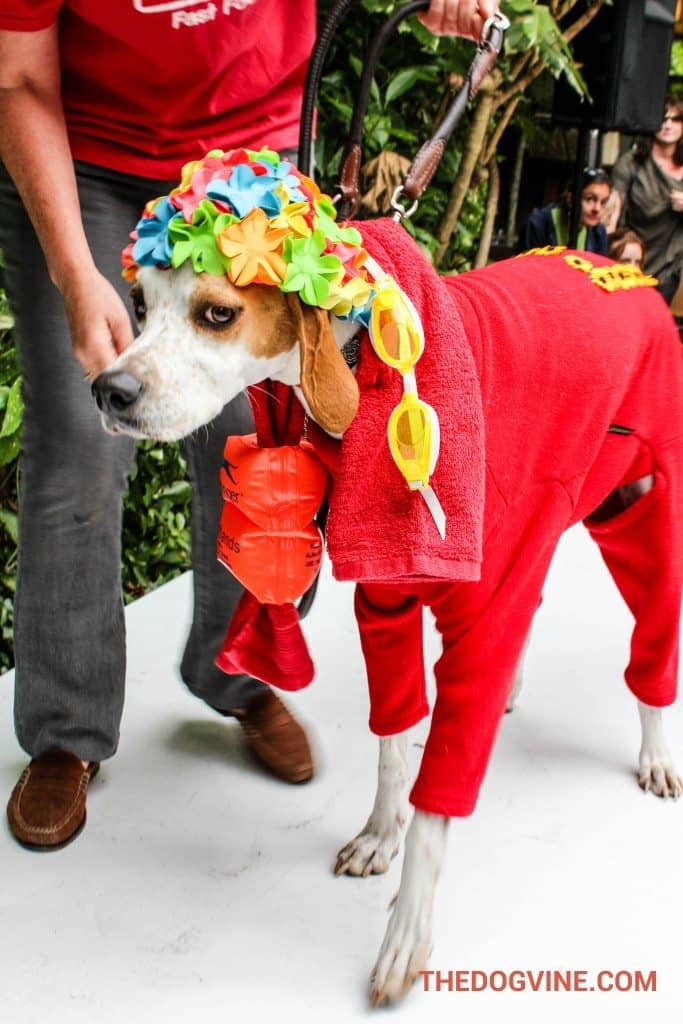 PupIdol 2015 - Best Dressed