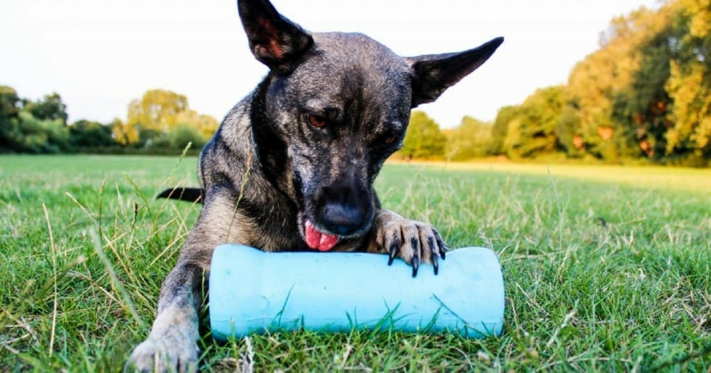 Crinkit Dog Toy for Tough Chewers – Review and Giveaway