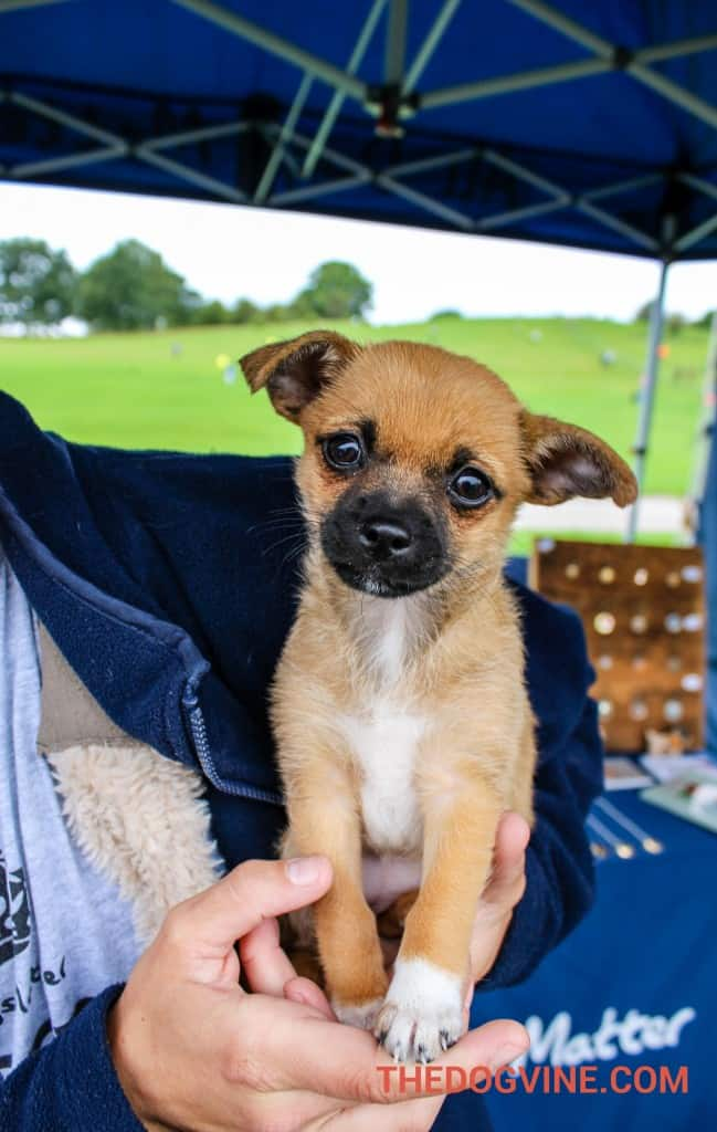 All Dogs Matter Dog Plum at PupAid 2015