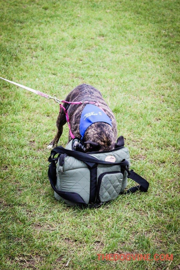 All Dogs Matter Abi at PupAid 2015