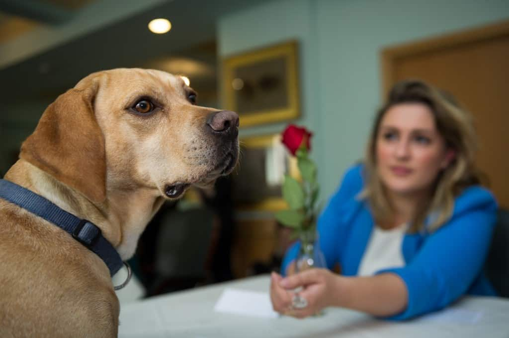 Puppy speed dating at the Kennel Club HQ