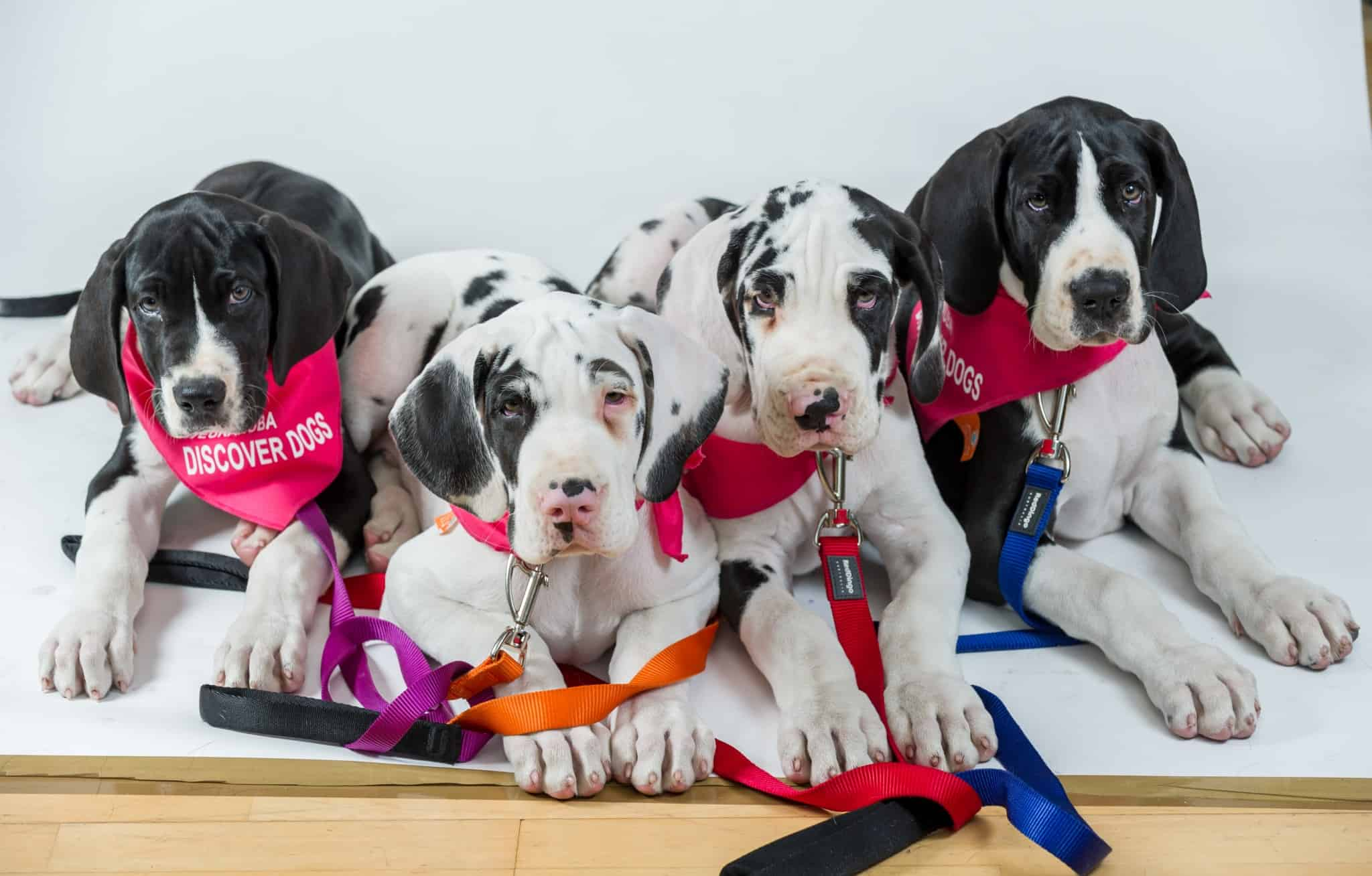 pup speed dating london
