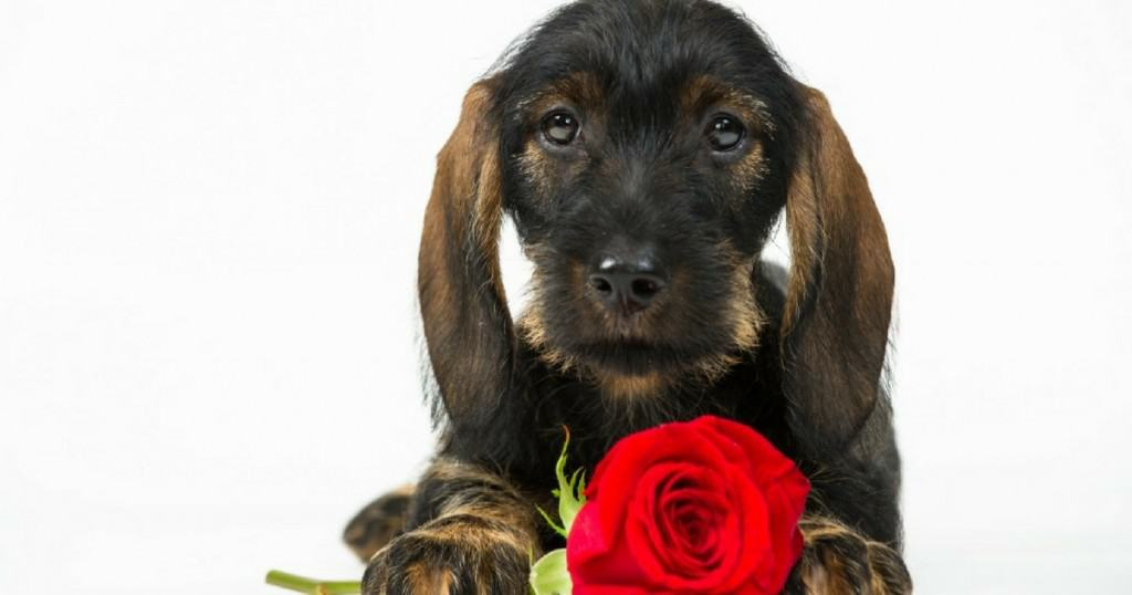 Finding a Paw-fect Match at a Puppy Speed Dating Pop-up