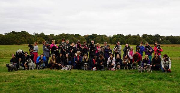 Schnauzerfest 2014 on Wimbledon Common