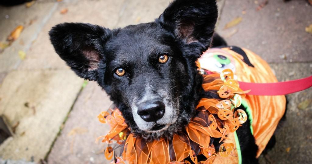 Hounds of Halloween: All Dogs Matter Halloween Walk 2015