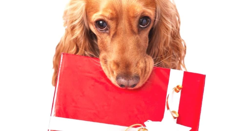 16 Last Minute Christmas Gifts for Dog Lovers